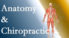 Chiropractic Care confidently delivers chiropractic care based on knowledge of anatomy to diagnose and treat spine related pain.